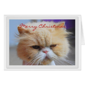 Merry Christmas Persian Cat Humor Greeting Card