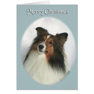 Merry Christmas Sheltie Card