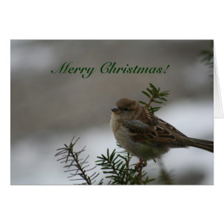 Merry Christmas!  Sparrow! Greeting Card
