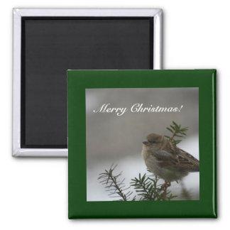 Merry Christmas!  Sparrow! Fridge Magnets