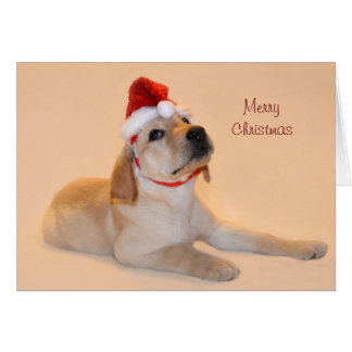 Merry Christmas - Yellow Lab Greeting Card