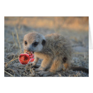 Merry Little Meerkat Christmas - Greeting Card