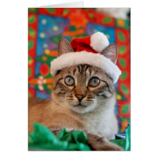 Merry Meowy Christmas from Kitty Santa! Card