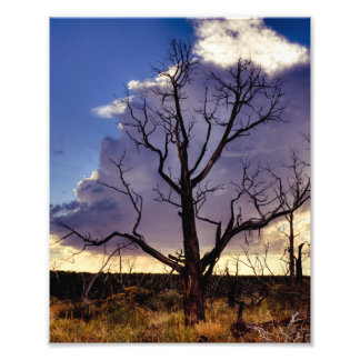 Mesa Verde Colorado Photo Art