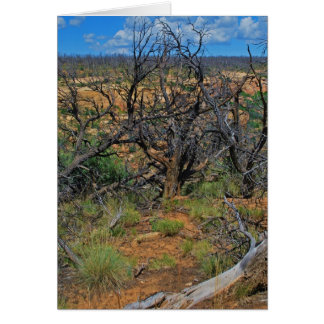 """""""Mesa Verde National Park"""" collection Greeting Cards"""