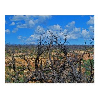 """Mesa Verde National Park"" collection Postcards"