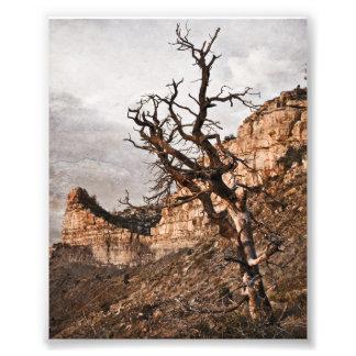 Mesa Verde Print Art Photo