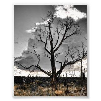 Mesa Verde Print Photo Art