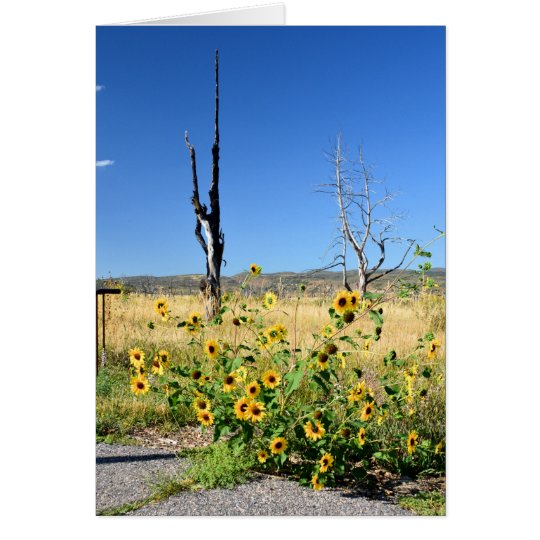 Mesa Verde View Card
