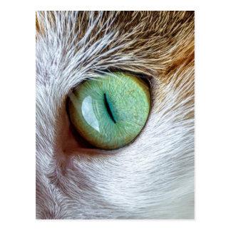 Mesmerizing Beautiful Green Cat's Eye Postcard