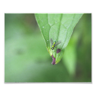 Metallic fly photographic print