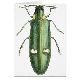 Metallic Wood-Boring Beetle Card