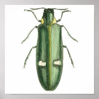 Metallic Wood-Boring Beetle Posters