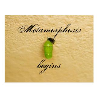 Metamorphosis Begins Monarch Butterfly Green Postcard