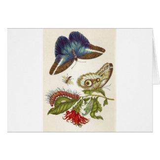 Metamorphosis insectorum Surinamensium Card