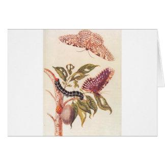 Metamorphosis of a Butterfly Maria Sibylla Merian Card