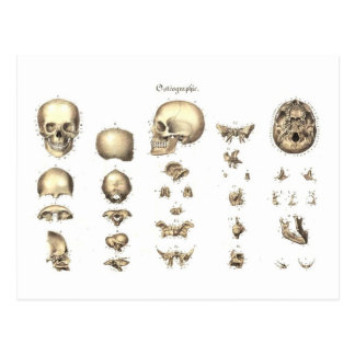 Methodical anatomy of the skull postcard