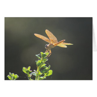 Mexican Amberwing Dragonfly Blank Card