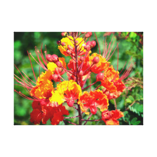 Mexican Bird of Paradise Canvas