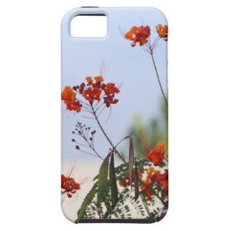 Mexican Bird of Paradise iPhone 5 Cases