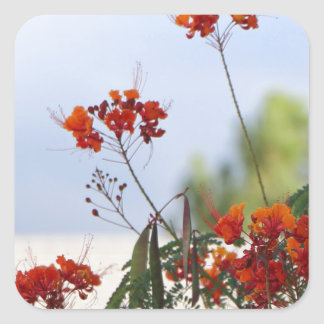 Mexican Bird of Paradise Square Sticker