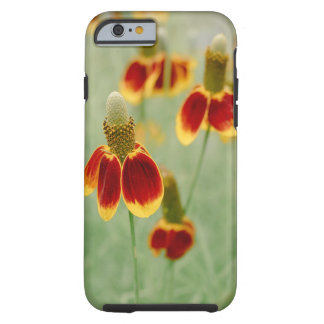 Mexican Hat Texas Wildflowers Tough iPhone 6 Case