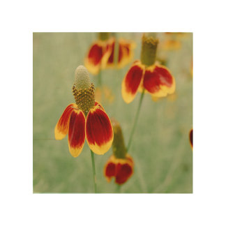 Mexican Hat Texas Wildflowers Wood Print