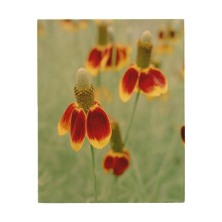 Mexican Hat Texas Wildflowers Wood Wall Decor