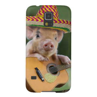mexican pig - pig guitar - funny pig cases for galaxy s5