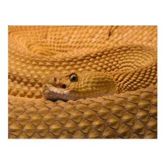 Mexican west coast rattlesnake postcard