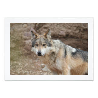 Mexican Wolf 13 Cm X 18 Cm Invitation Card