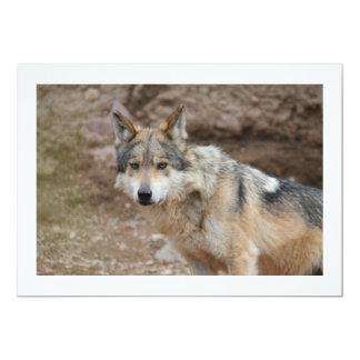 Mexican Wolf 13 Cm X 18 Cm Invitation Card
