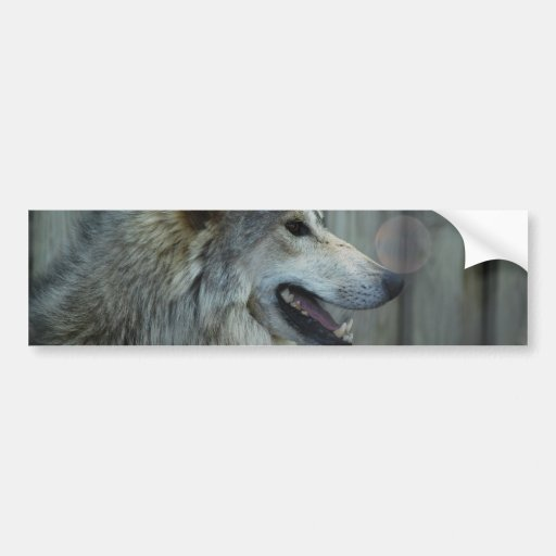 Mexican Wolf Bumper Stickers