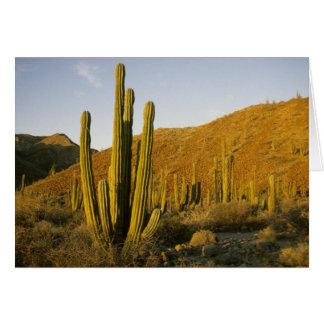Mexico, Baja, Santa Catalina Island, Sea of Card