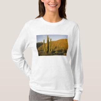 Mexico, Baja, Santa Catalina Island, Sea of T-Shirt