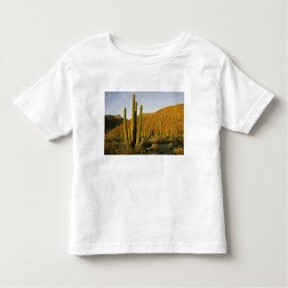 Mexico, Baja, Santa Catalina Island, Sea of Toddler T-Shirt