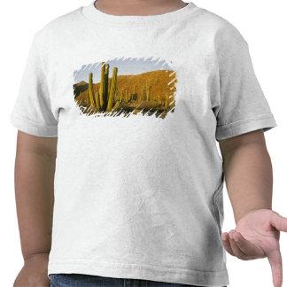 Mexico Baja Santa Catalina Island Sea of Shirts