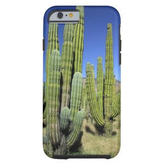 Mexico, Sonora, San Carlos. Saguaro & Organ Pipe Tough iPhone 6 Case