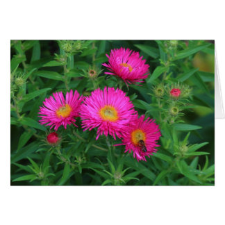Michaelmas Daisies and Bee Greeting Card