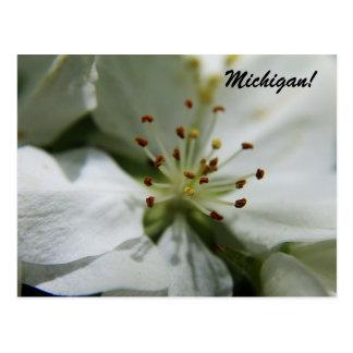 Michigan Apple Blossom Postcard