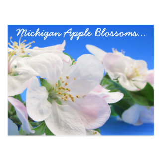 Michigan Apple Blossoms Postcard