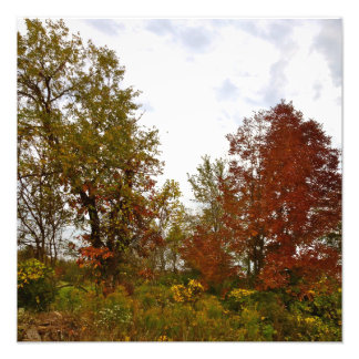 Michigan Autumn Treescape Photo Print