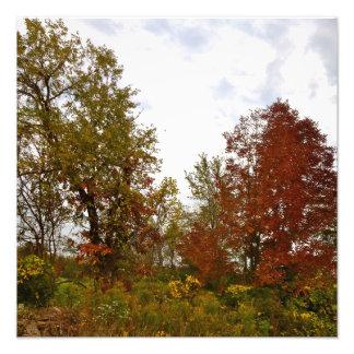 Michigan Autumn Treescape Photo Print