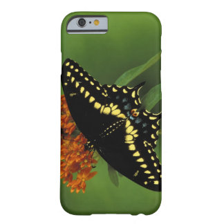 Michigan, Rochester. American Eastern Black Barely There iPhone 6 Case