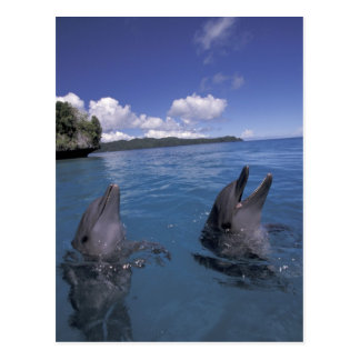 Micronesia, Palau Bottlenose dolphins Postcard