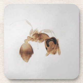 Microscope photo of an ant coaster
