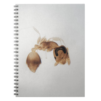 Microscope photo of an ant notebook