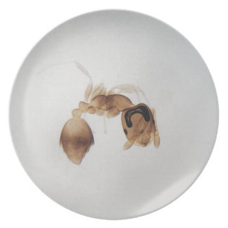 Microscope photo of an ant plate