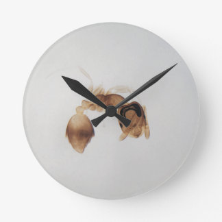 Microscope photo of an ant round clock