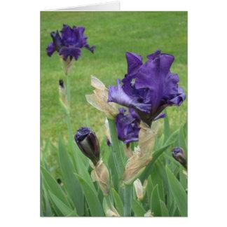 Midnight Blue Iris Small Note Card